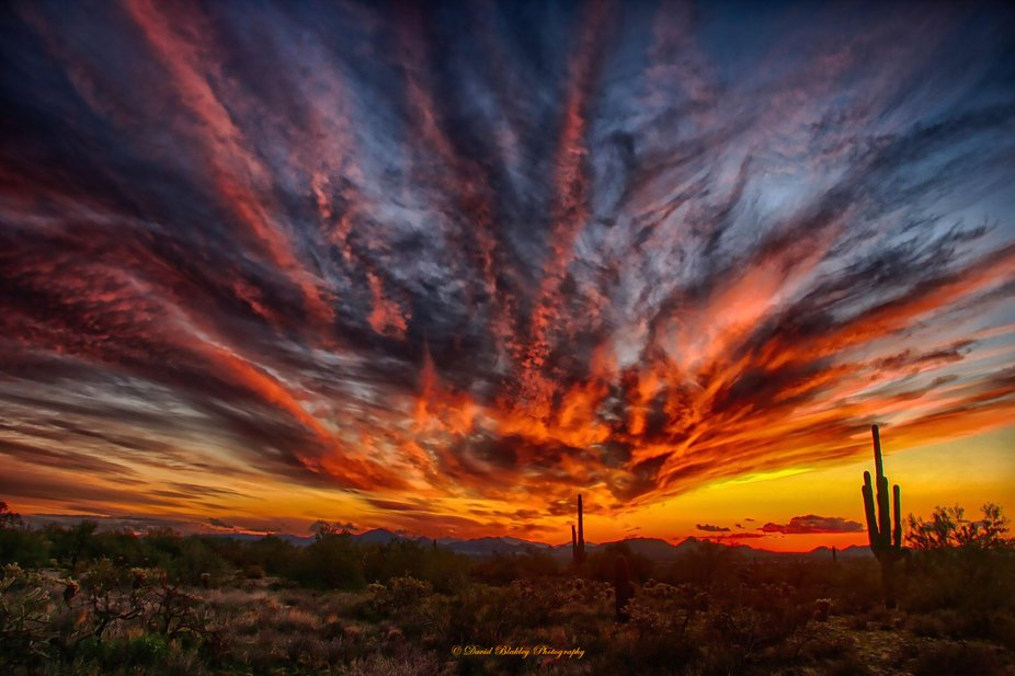 Photographed with a Nikon D750 south of Tucson near the Mexican border.