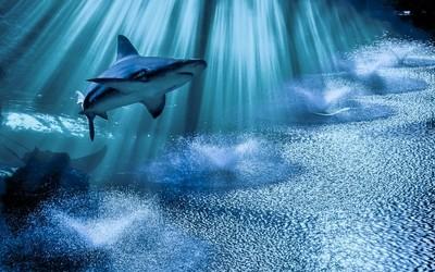 Shark in waterjet