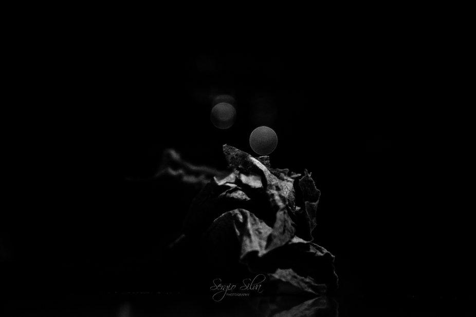 Untitled (24)