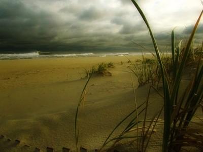 Dune Grass Mysterious
