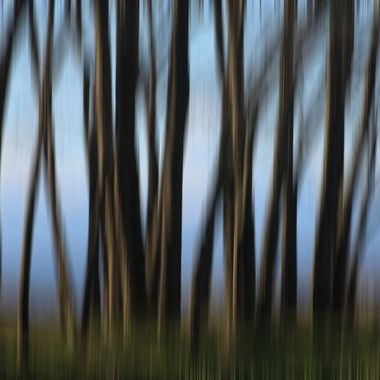 Forest Blurr_IMG_0148