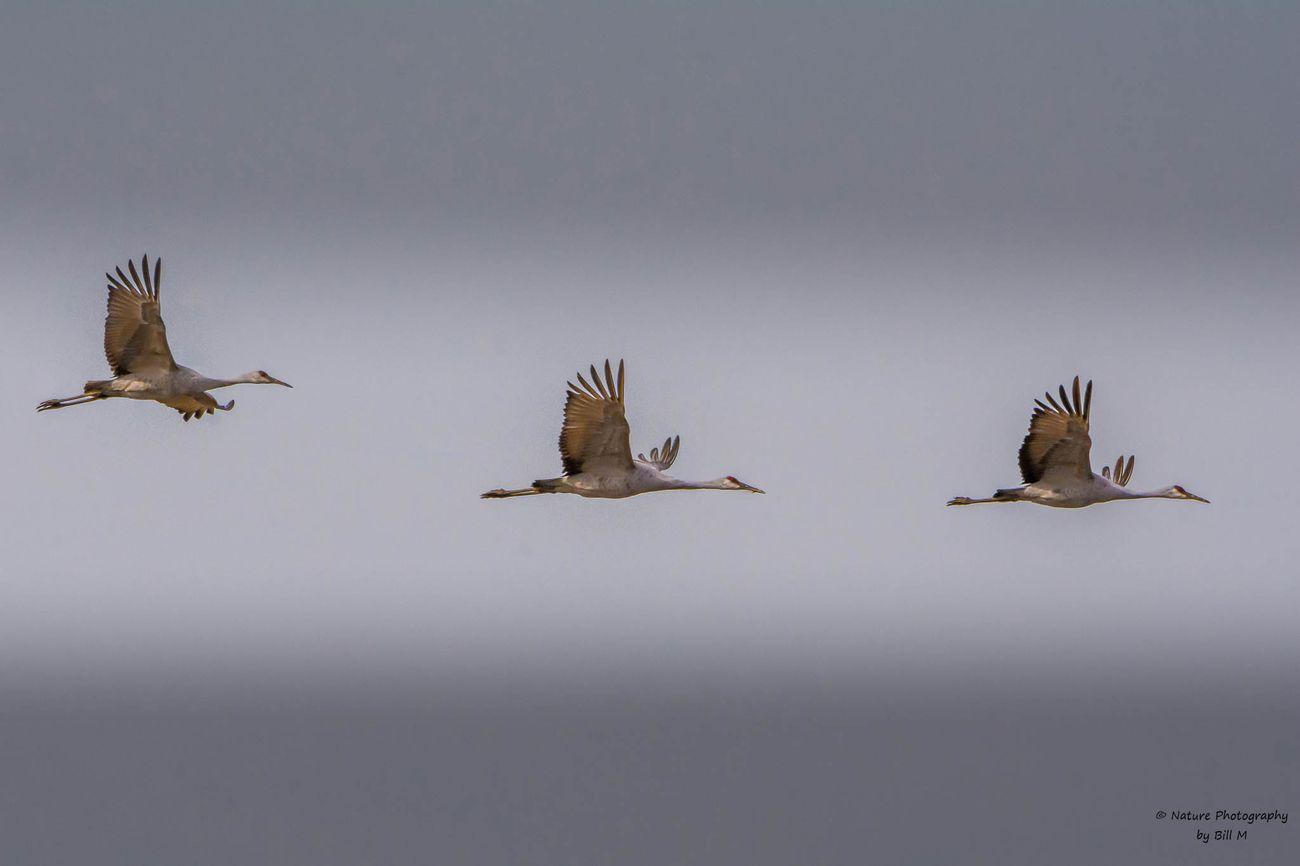 Flying in unison