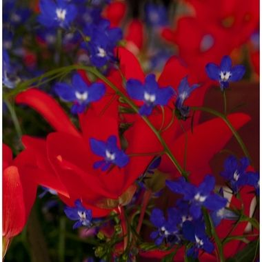 Red & Blue Flowers