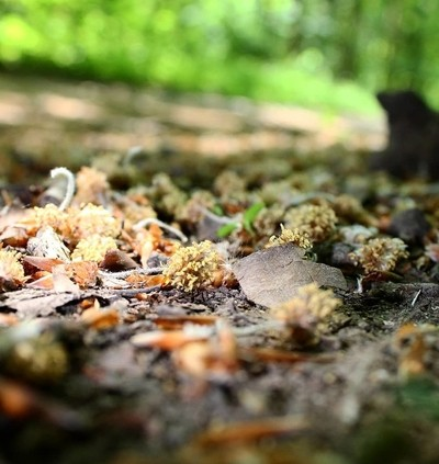 #perspective #lowviewpoint #woodlandfloor #photography #canonphotography #ca