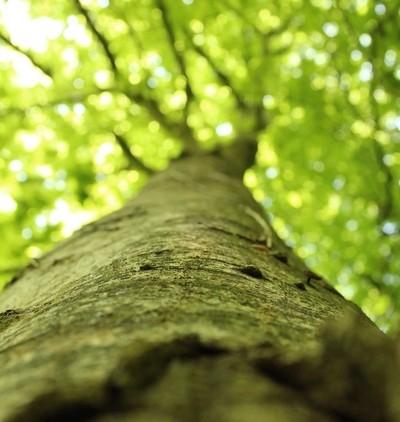 #thatshigh #tree #naturephotography