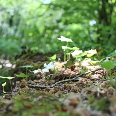 #woodland #woodlandfloor #canonphotography #naturephotography #adifferentvie