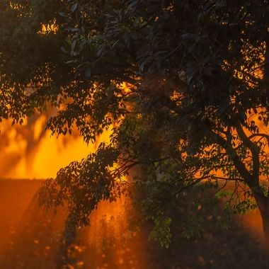 """There are many reasons California is called the golden state.  The color of the morning sun is just majestic.  How can anyone not getting up early to capture this light and all the lives it shines on?  This reminds me how God said, """"Let there be light,"""" at the beginning."""
