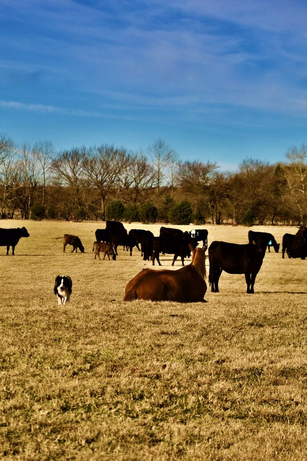A typical day on the farm in Southeastern Oklahoma.