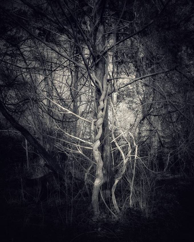 Trying something new, Black and White, Twisted Tree