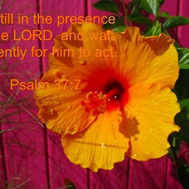 Be still in the presence of the LORD, and wait patiently for him to act. Psalm 37:7