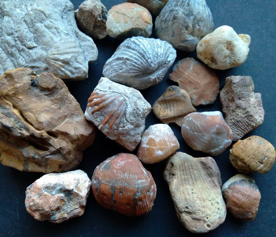 My collection of fossils and imprints, all found locally.