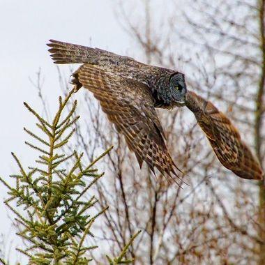 Leaving it's perch