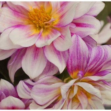 8612 Orange & Pink Flowers