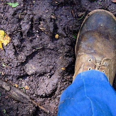 I wear a size 11 boot so that's a pretty big bear