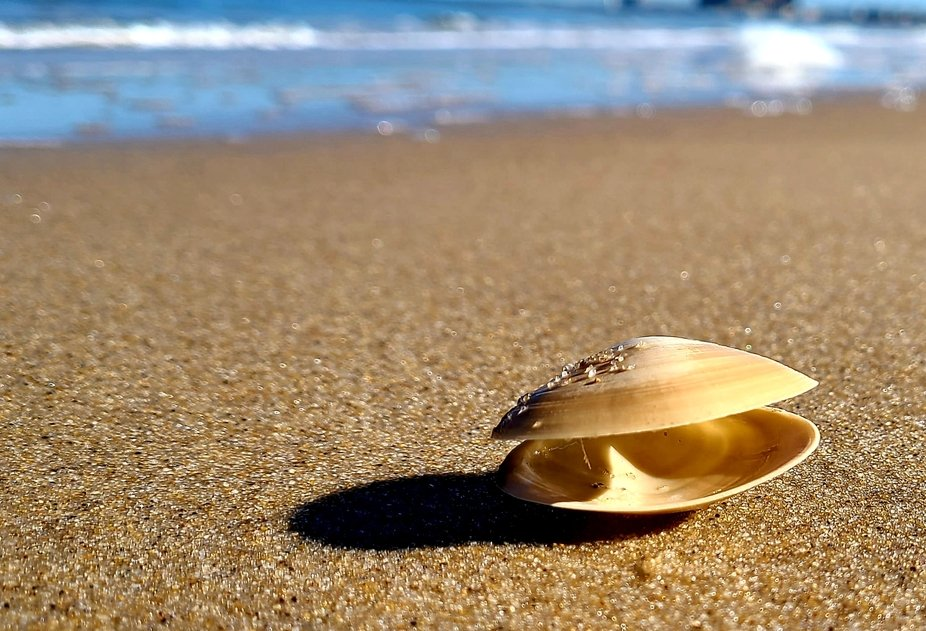 The Empty Shell and The Sea