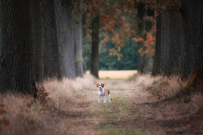 'little dog'. by maijpictures - Monthly Pro Photo Contest Volume19