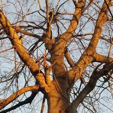 Sun light on tree.