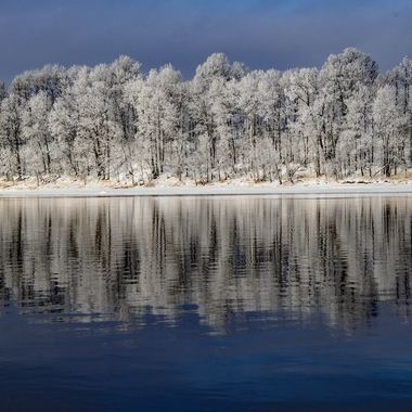 Hoarfrost on the trees along the Rainy River  on New Years eve day