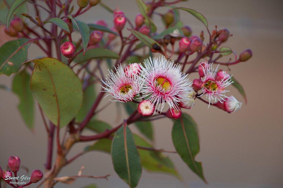 New blossum.