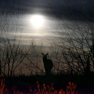 Moonlit Doe