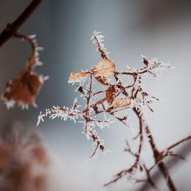 Cloud Frost
