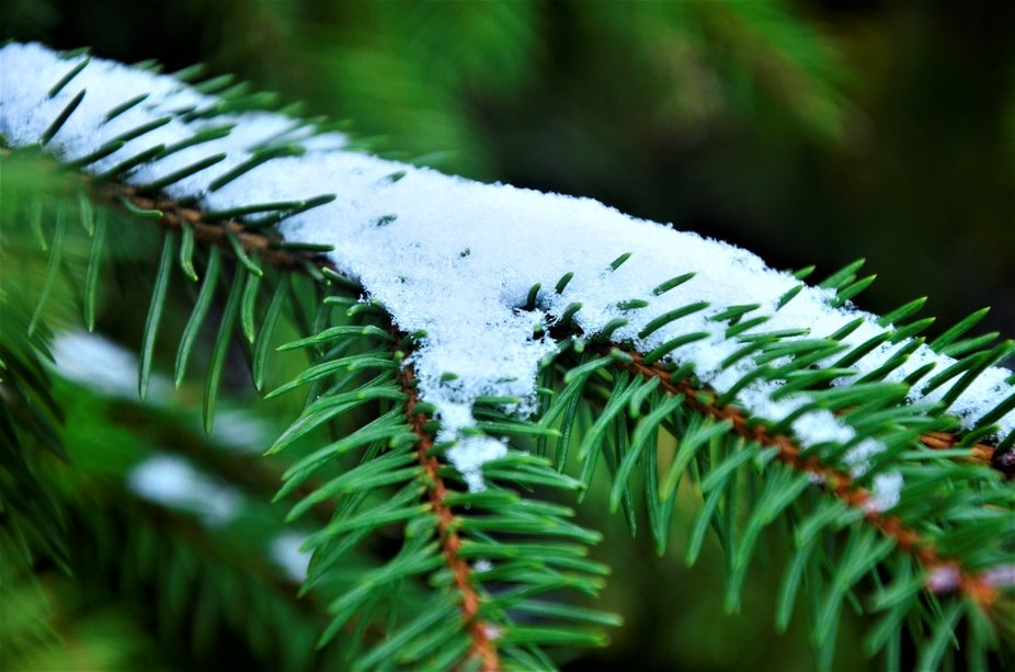 little winter