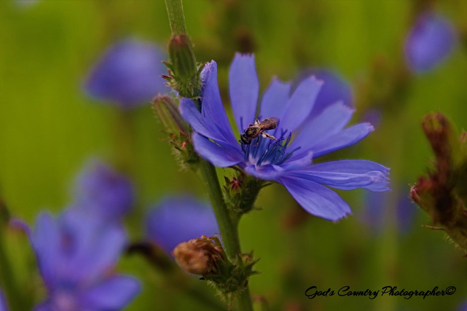 I absolutely love wild flowers. As well I love getting close ups of them and whatever cuteness is...