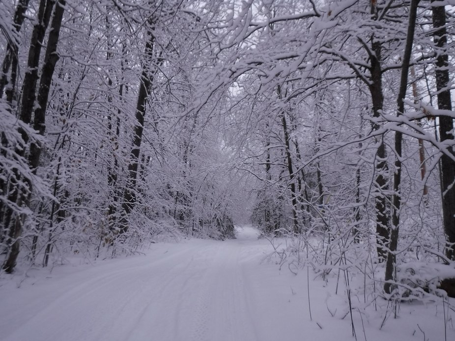 Quiet beauty of new fallen snow, in the quiet woods of cottage country