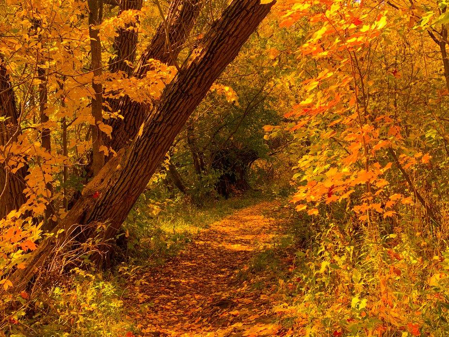 T J Dolan Trail