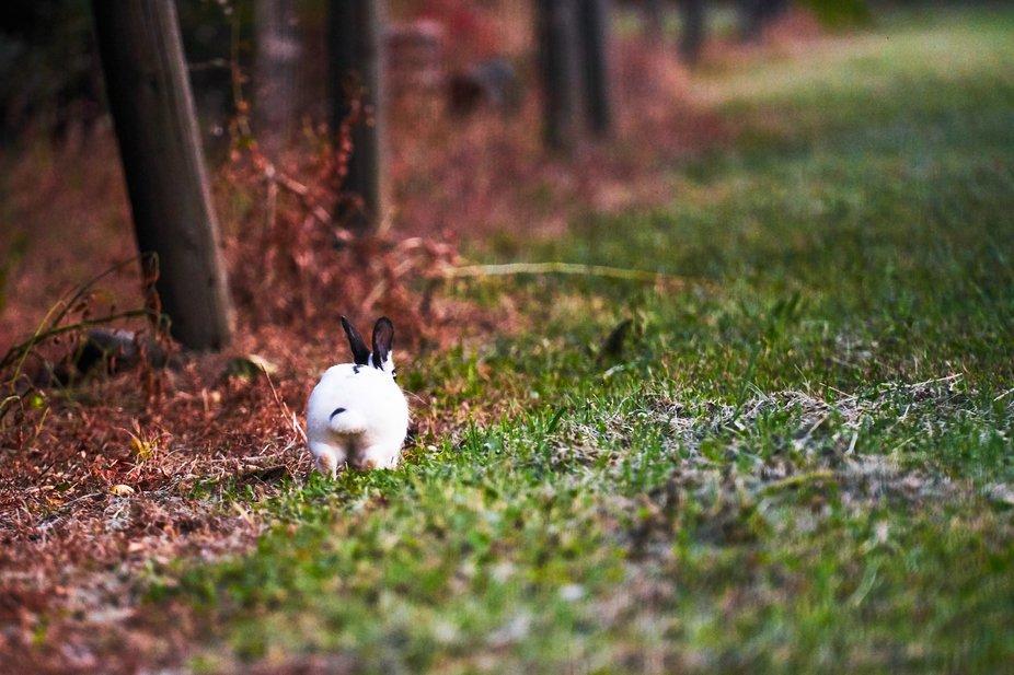 bunny silflay