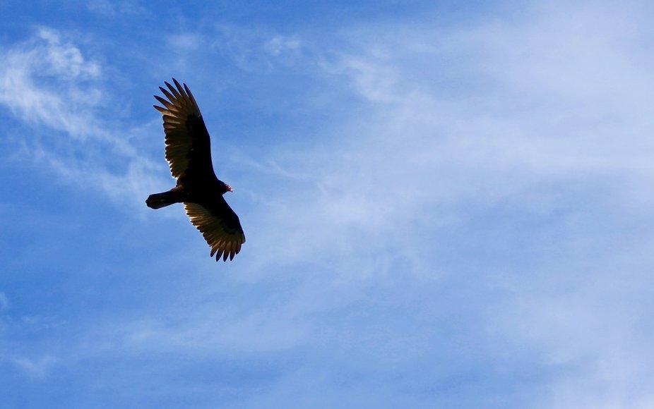 Visiting bird sanctuary in Florida