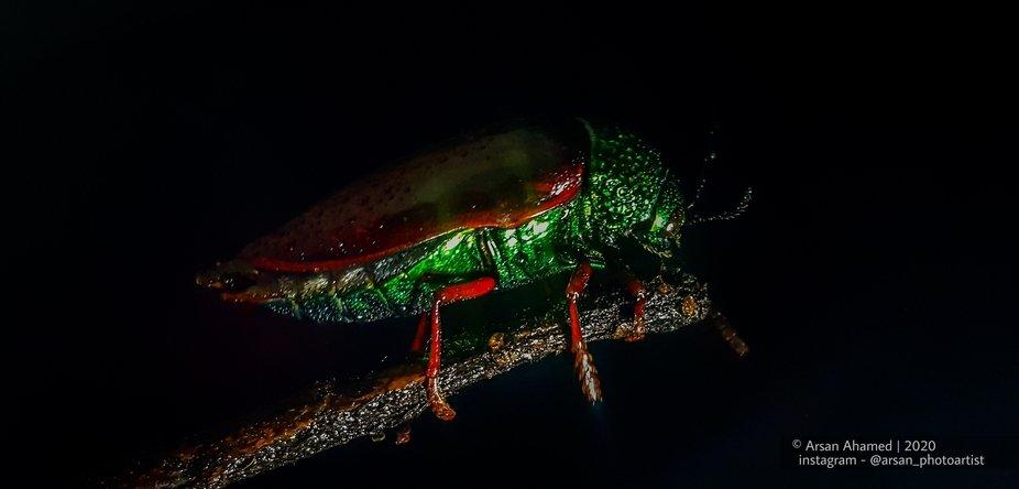 beauty of bug