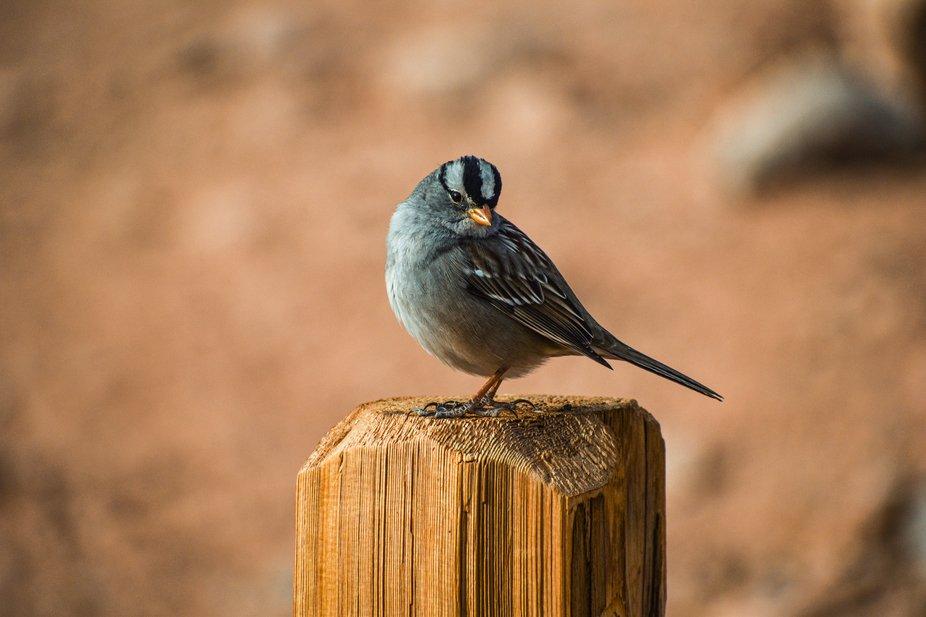Bird on fence post