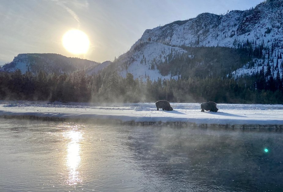 Icy Bison in Yellowstone National Park