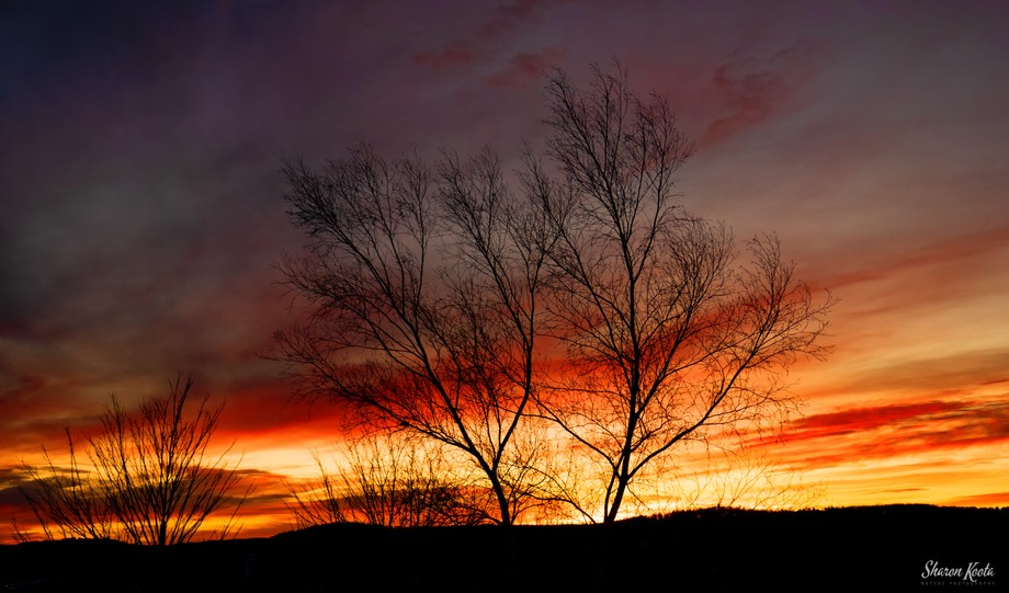 2021 began with cloudy gray skies but on January 9th we saw a vibrant beautiful sunset here in th...