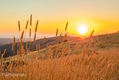 Tangerine Sunset at Russian Ridge Open Preserve