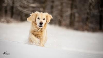 Néo dans la neige