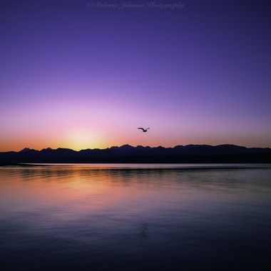 Just playing around in my LR catalog and came up with this. What a glorious ending to the day this was. We sure are blessed with beauty in the PNW. I am glad it is my home. The Olympic Mountains, Hood Canal, Washington, USA