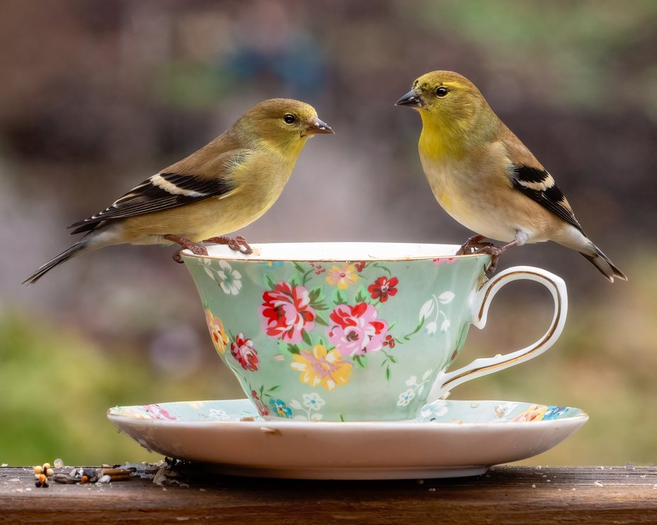 Goldfinch Tea Party