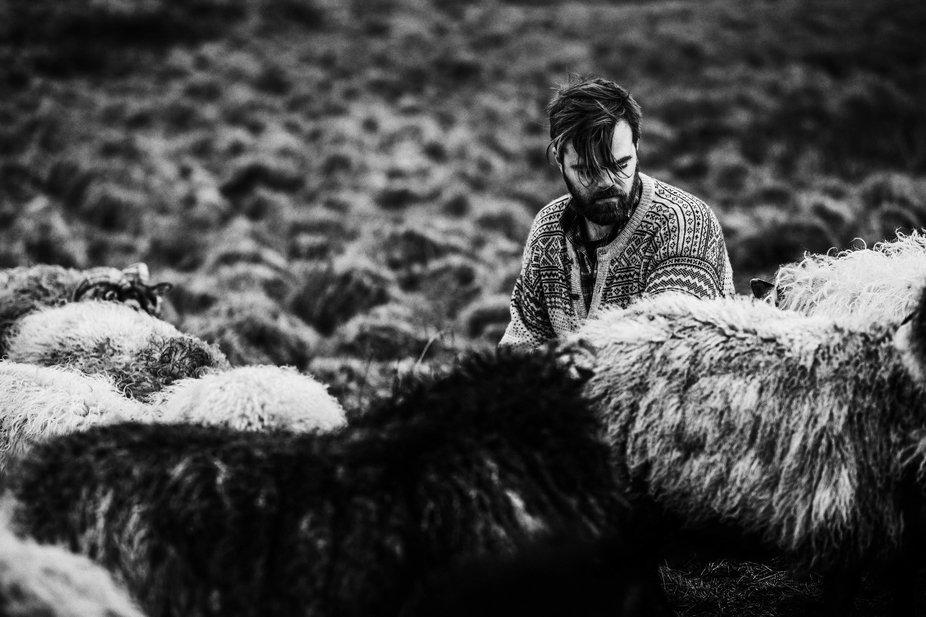 Wild sheep farmer in Norway