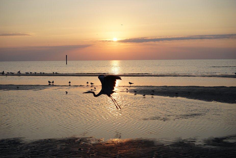 Heron at Dawn.