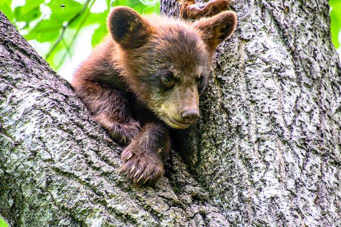 As far as wildlife goes this cute little black bear cub seemed like it loved to pose for me