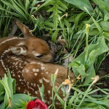 Flower Bed Surprise