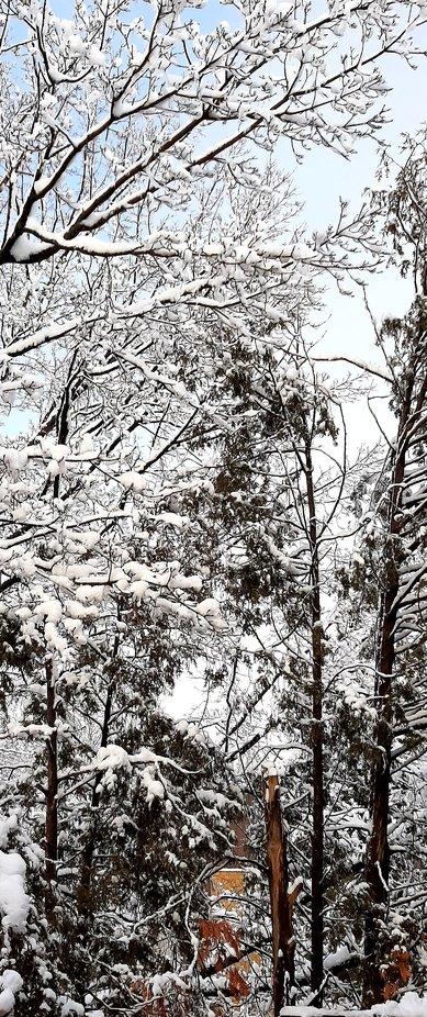Lendemain d'une tempête de neige