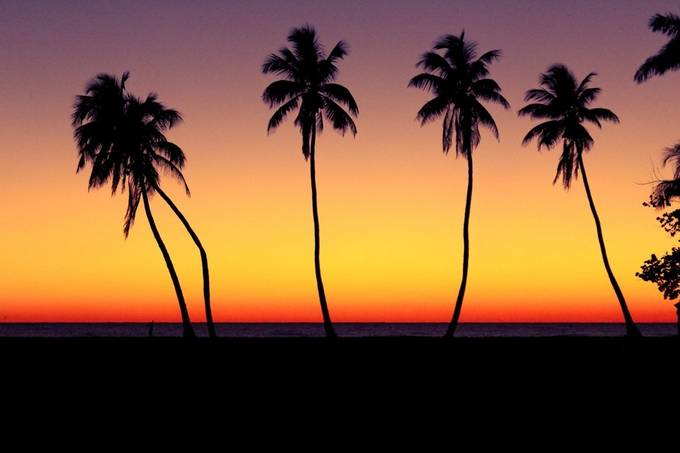 Naples, FL  by Ryssaval - Trees And Silhouettes Photo Contest