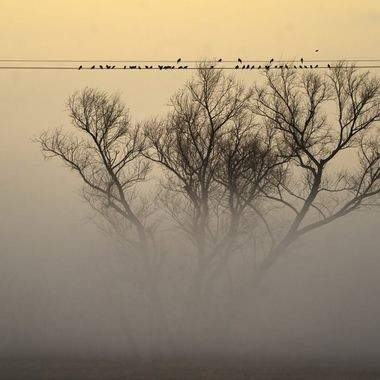 We got up at 5:30 in the morning and started to drive for an hour to our destination to photograph birds in the early morning, only to find the place was socked in by fog.  It is interesting to see the birds were also waiting for the fog to lift.