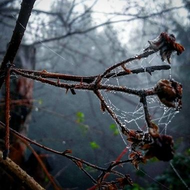 Misty Mornings with wet webs