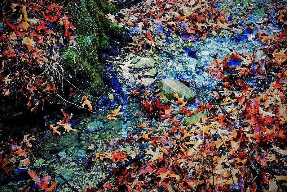 Dry creek bed wet leaves big limestone rocks colorful red oak leaves and winter moss all stand up...