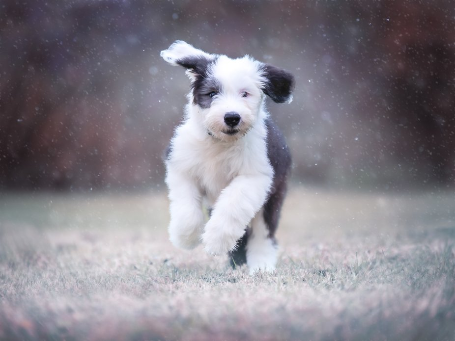 Monty's First Snowfall
