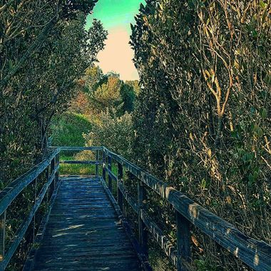 Taken at the Mangrove Boardwalk in the heart of Bunbury, Western Australia